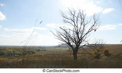 old dry tree in the autumn without leaves dry grass nature...