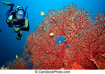 Scuba diver - Underwater landscape with scuba diver and...