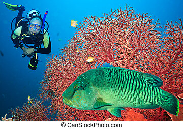 Scuba diver - Underwater landscape with scuba diver,...