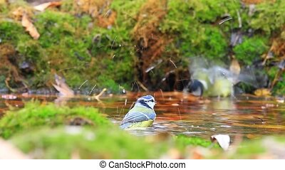 Two birds swimming in a pool of forest