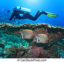 Diver and Angelfishes - Underwater landscape with couple of...