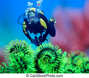 Diver underwater with feather starfish on foreground. Focus...