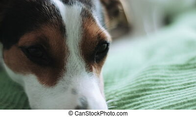 Dog looking away - Dog's face macro with eyes looking away...