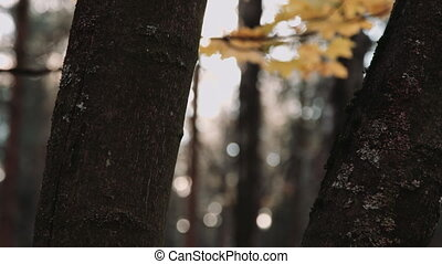 Tree trunk in autumn - Cropped close up tree trunks on...