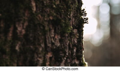Peice of tree in sunlight - Cropped close up tree bark back...