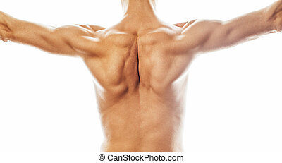mens back close up isolated on white background, many muscle...