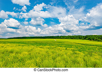 Field with flowers. - Field with flowers at hot day summer...