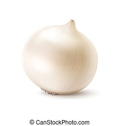 Fresh Whole White Onion Bulb Close up - Vector Fresh Whole...