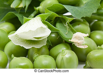 Green pea with blossom
