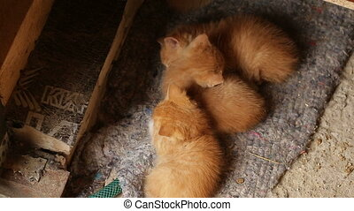 kittens are sleeping - Red little kittens are sleeping