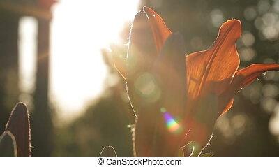 Beautiful flower in the sunlight