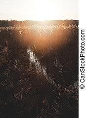 autumn dry grass sedge at the dusk