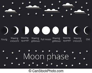 The phases of the moon. Vector - The phases of the moon. The...