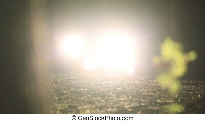 bright light of car headlights at night in the forest