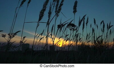 grass sways in the wind, tranquil landscape at sunset, slow...