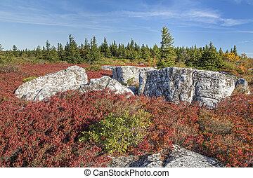 Autumn Hues at Bear Rocks