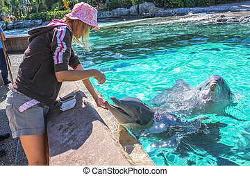 Woman feeds dolphin - Woman feeds a laughing dolphin in a...