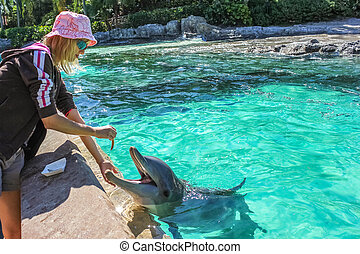 Tourist feeds dolphin - Young woman feeds a smiling dolphin...