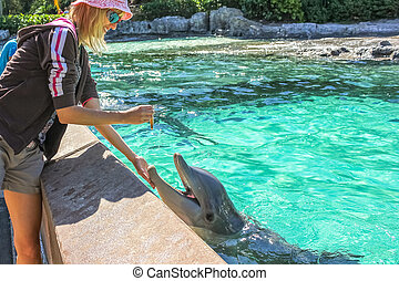 Woman feeds dolphin - Smiling woman feeds a dolphin in a...