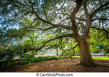 Tree outside the Trinity Episcopal Cathedral, in Columbia,...