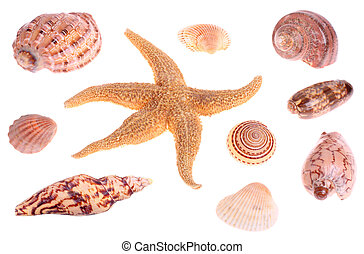 Seashells and starfish - seashells and starfish isolated on...