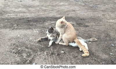 Cats Mating. Pets outdoors