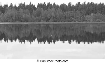 Forest reflection in the lake - Black and white Forest...