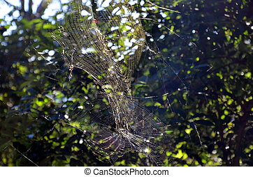 Spider hanging on the spider web. Spider web of the hunt. Spider web with colorful background.