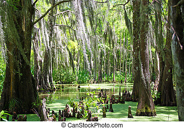 Louisanna Swamp with moss on trees