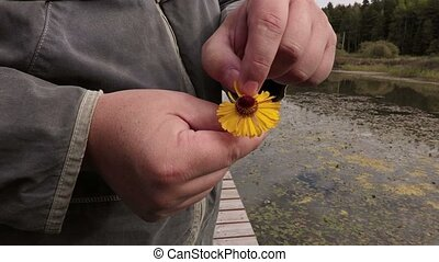 Man pulling petals from flower on the footbridge