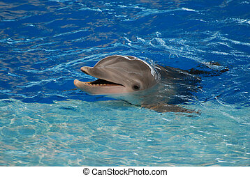 Smiling Dolphin With His Head Out of the Water - Cute...