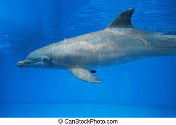 Dolphin Swimming Underwater - Gorgeous dolphin swimming...
