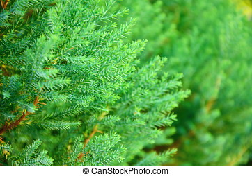 Close up texture of green leav - Close up texture of small...