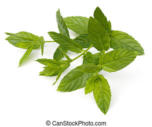 Spearmint - Fresh Spearmint leaves Mentha spicata isolated...