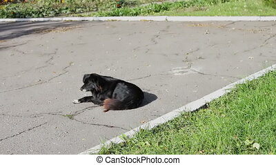 stray black dog in the park - stray black dog lying in the...