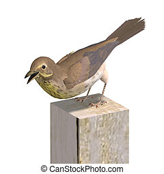 Bird Swainson\'s Thrush. 3D rendering with clipping path and...