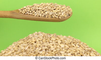Wooden spoon pours grains pearl barley at heap of pearl...