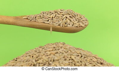 Wooden spoon pours grains rye at heap of rye on a green...