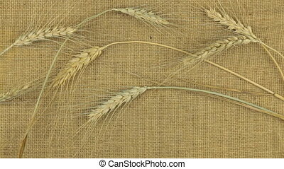 Approximation, zoom of wheat ears lying on sackcloth, top...