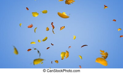 Loopable autumn leaves - Seamlessly loopable animation of...