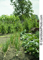 Vegetable Garden - Vegetable garden with onions and cabbage