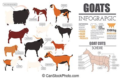 Goat breeds infographic template. Animal farming. Flat...
