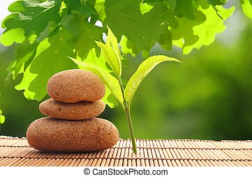spa still life with zen stone and green leaf