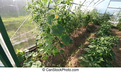 greenhouse - panning in the greenhouse. Plants in greenhouse