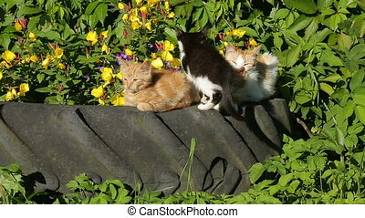 cats basking in the sun in the garden