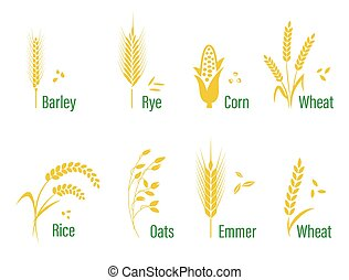 Cereals icon set with rice, wheat, corn, oats, rye, barley.