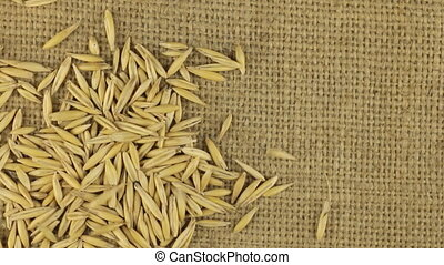 Falling grains of oat on a rotating cloth burlap. - Falling...