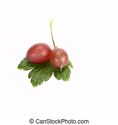 Red gooseberries on leaves on white background