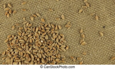 Falling grains of wheat on a rotating cloth burlap, top view