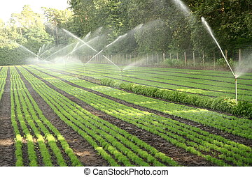 Watering nursery plantation - Water sprinkler system working...